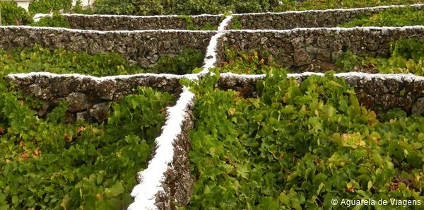 Vinhas dos Biscoitos, Terceira